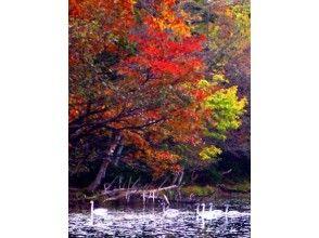 プランの魅力 紅葉と白鳥 の画像