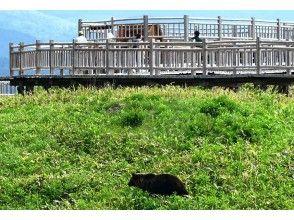 プランの魅力 野生のヒグマ の画像
