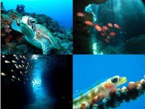 プランの魅力 豐富的潛水點♪ の画像
