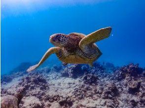 プランの魅力 天然海龟 の画像