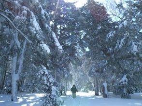 【群馬・万座温泉】万座温泉弁天池、針葉樹巨木の森 カラマツ天然母樹林でスノーシュー体験の魅力の説明画像