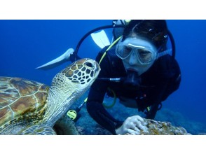 プランの魅力 ウミガメと記念撮影ができる!? の画像