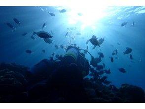 プランの魅力 ภาพดำน้ำ の画像