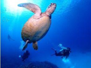 プランの魅力 遇见海龟! の画像