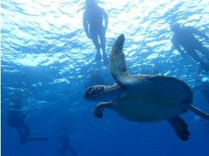 プランの魅力 您也可以遇见海龟! の画像