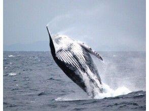 プランの魅力 座头鲸! の画像