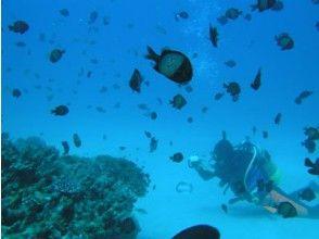 【鹿児島・奄美大島】体験ダイビング(学生割引プラン)の魅力の説明画像