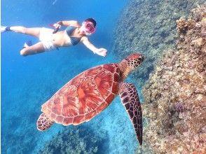プランの魅力 Let's swim with the popular sea turtles! の画像