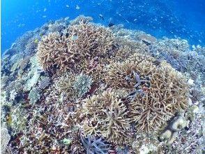 プランの魅力 Powerful! Coral and colorful fish の画像