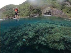 プランの魅力 こんなに大きな珊瑚も。。 の画像