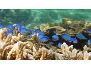 プランの魅力 Colorful fish welcome you の画像