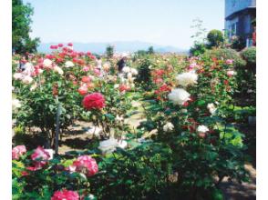 プランの魅力 石田玫瑰园 の画像