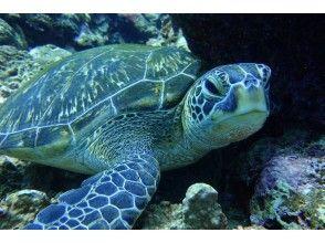 プランの魅力 海龟浮潜! の画像