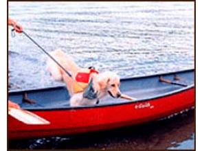 プランの魅力 강아지도 대 흥분! の画像
