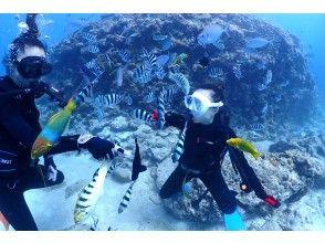 プランの魅力 カラフルな魚たちと触れ合える! の画像