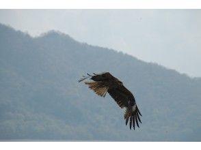 プランの魅力 いつもの鳥も、いつもと違う視点で の画像