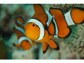 プランの魅力 Watching tropical fish and anemone fish is also a real pleasure! の画像