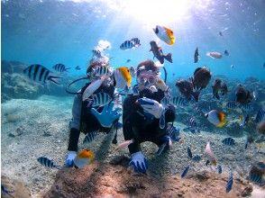 プランの魅力 魚の方から遊びに来てくれますよ♪ の画像
