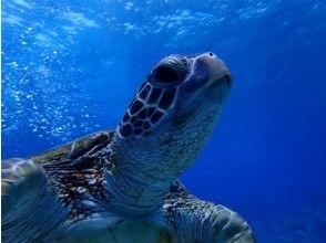 プランの魅力 海ガメに会いに行こう♪ の画像