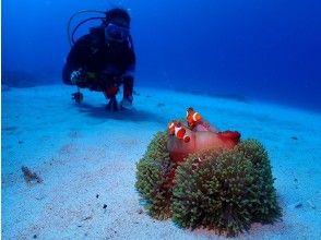 プランの魅力 かわいいお魚が出迎えてくれます の画像