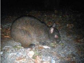 プランの魅力 クロウサギに出会える確率は90%以上! の画像