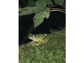 プランの魅力 こちらも珍しいカエル! の画像