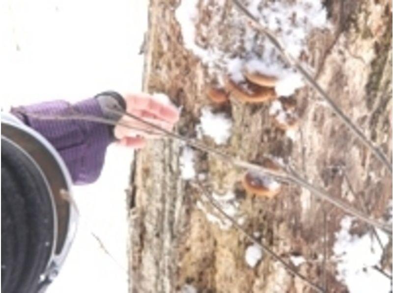 プランの魅力 なんと、山の木に天然のなめこを発見!焼いて食べてもおいしいです。 の画像