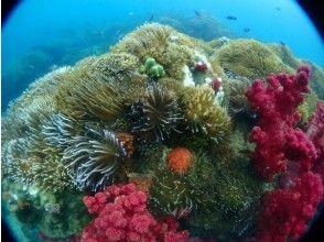 プランの魅力 カラフルな珊瑚群 の画像