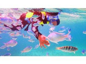 プランの魅力 Experience of interacting with fish の画像