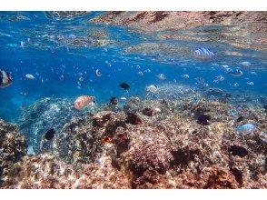 プランの魅力 Snorkeling experience in the sea around the phantom island! の画像