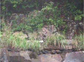 プランの魅力 川にヤクザルが下りてくることも。 の画像