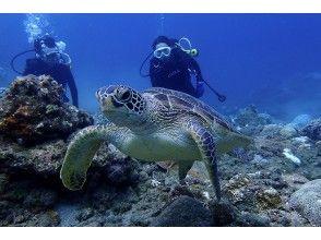 プランの魅力 You can meet sea turtles with high probability! の画像