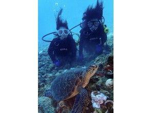 プランの魅力 Commemorative photo with sea turtles! の画像