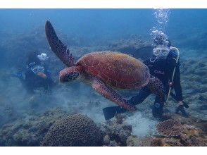 プランの魅力 Suddenly, a sea turtle is overhead! の画像