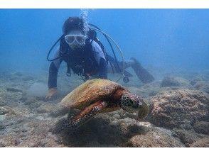 プランの魅力 Small green turtle の画像