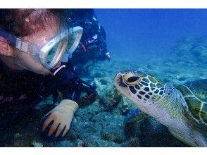 プランの魅力 Talking with sea turtles の画像