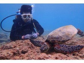 プランの魅力 Sea turtles during a meal の画像