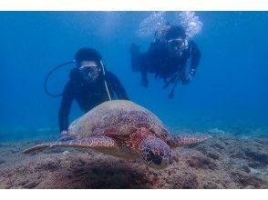 プランの魅力 Let's swim with sea turtles! の画像