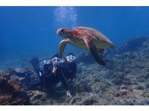 プランの魅力 Sea turtles swimming away の画像