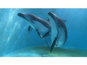 プランの魅力 カマイルカと泳げる体験ダイビングは日本初! の画像
