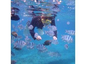 プランの魅力 예쁜 물고기들 の画像