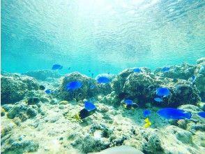 プランの魅力 カラフルな魚達 の画像