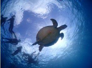 プランの魅力 ウミガメと一緒に泳ごうっ! の画像