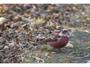 プランの魅力 野鳥が豊富♡ の画像