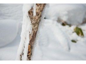 プランの魅力 雪風景を眺めながら・・・・ の画像