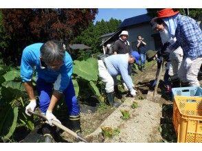 プランの魅力 農作業体験:里芋掘り収穫体験 の画像