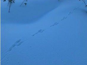 プランの魅力 Animal tracking の画像