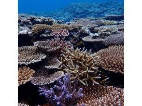 プランの魅力 癒しの珊瑚畑 の画像
