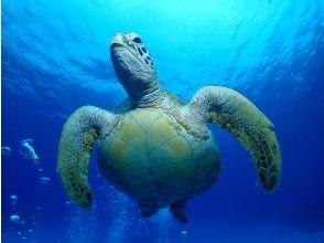 プランの魅力 アオウミガメ の画像