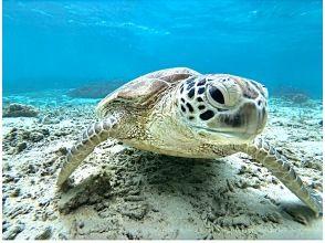 プランの魅力 Let's go see the sea turtles の画像